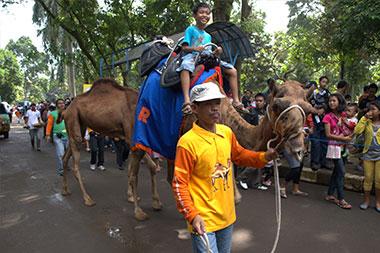Camel-ridinhg