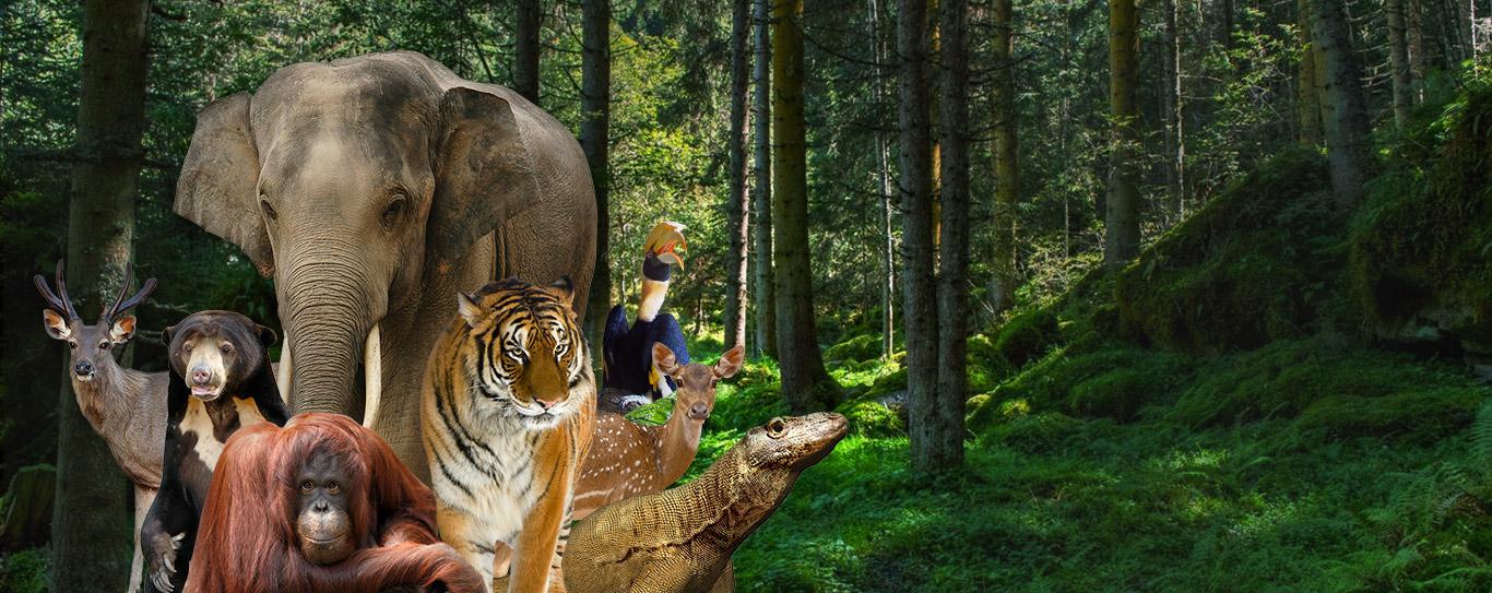 Ragunan Zoological Park